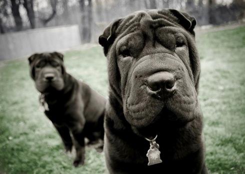 The pups.jpg